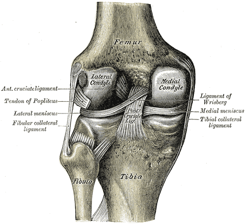 ACL INJURY