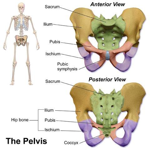 Pubic Symphysis Dysfunction